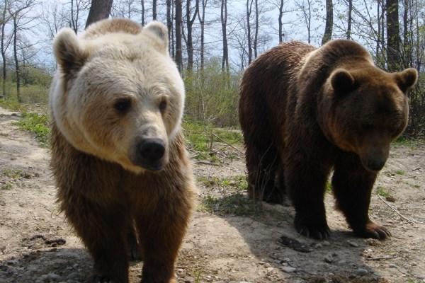 Bear Necessities Month