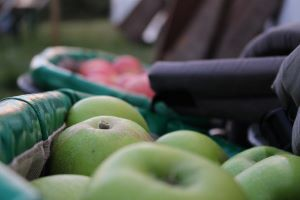 British Apples 'Secretly' Exposed