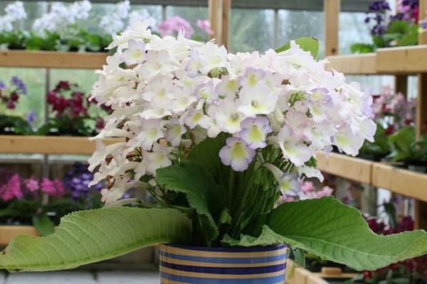 British Plant Nursery at RHS Chelsea 2012
